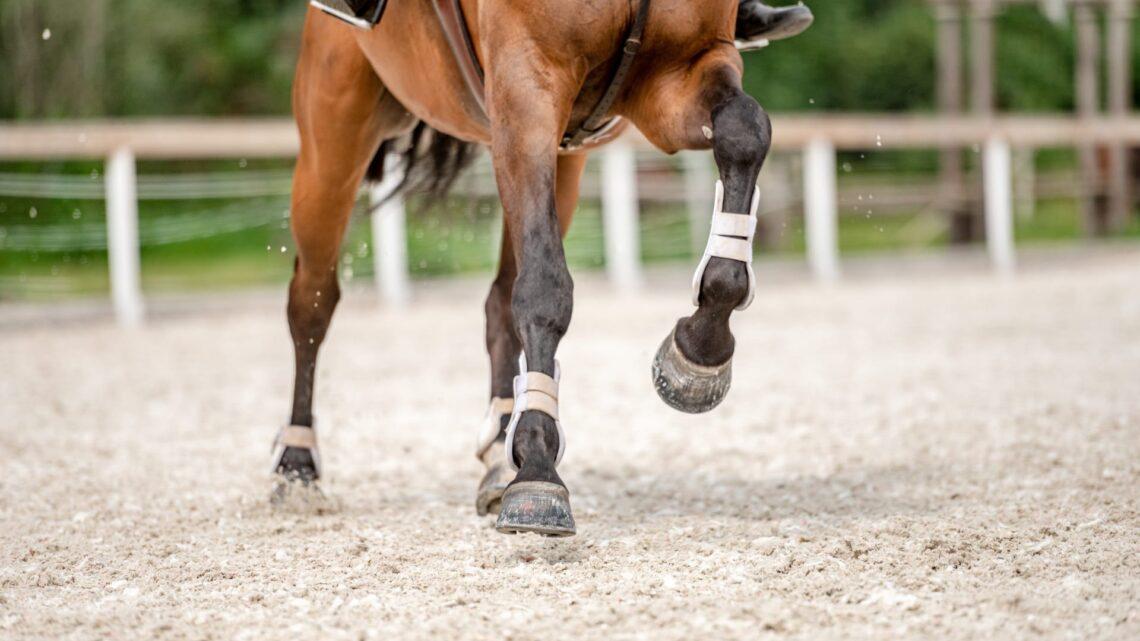 Qui consulter pour l'aménagement d'une piste d'équitation?